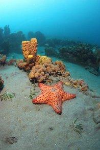 zdjęcie pod wodą, rafa koralowa